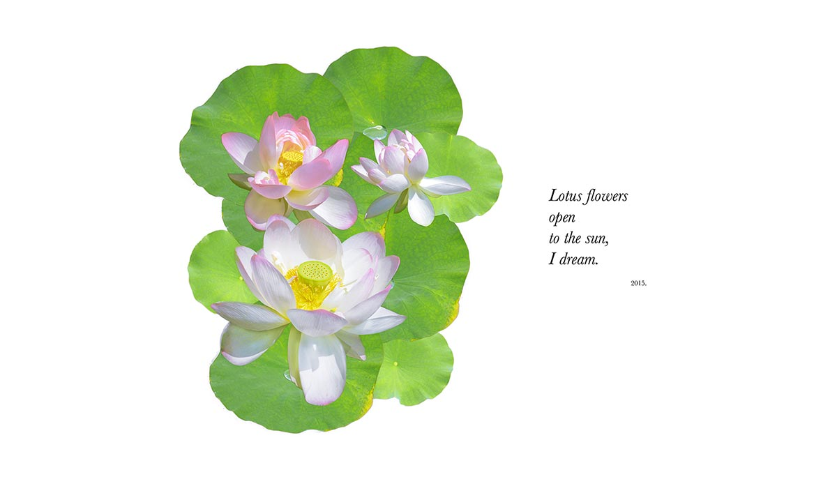 Lotus poem
